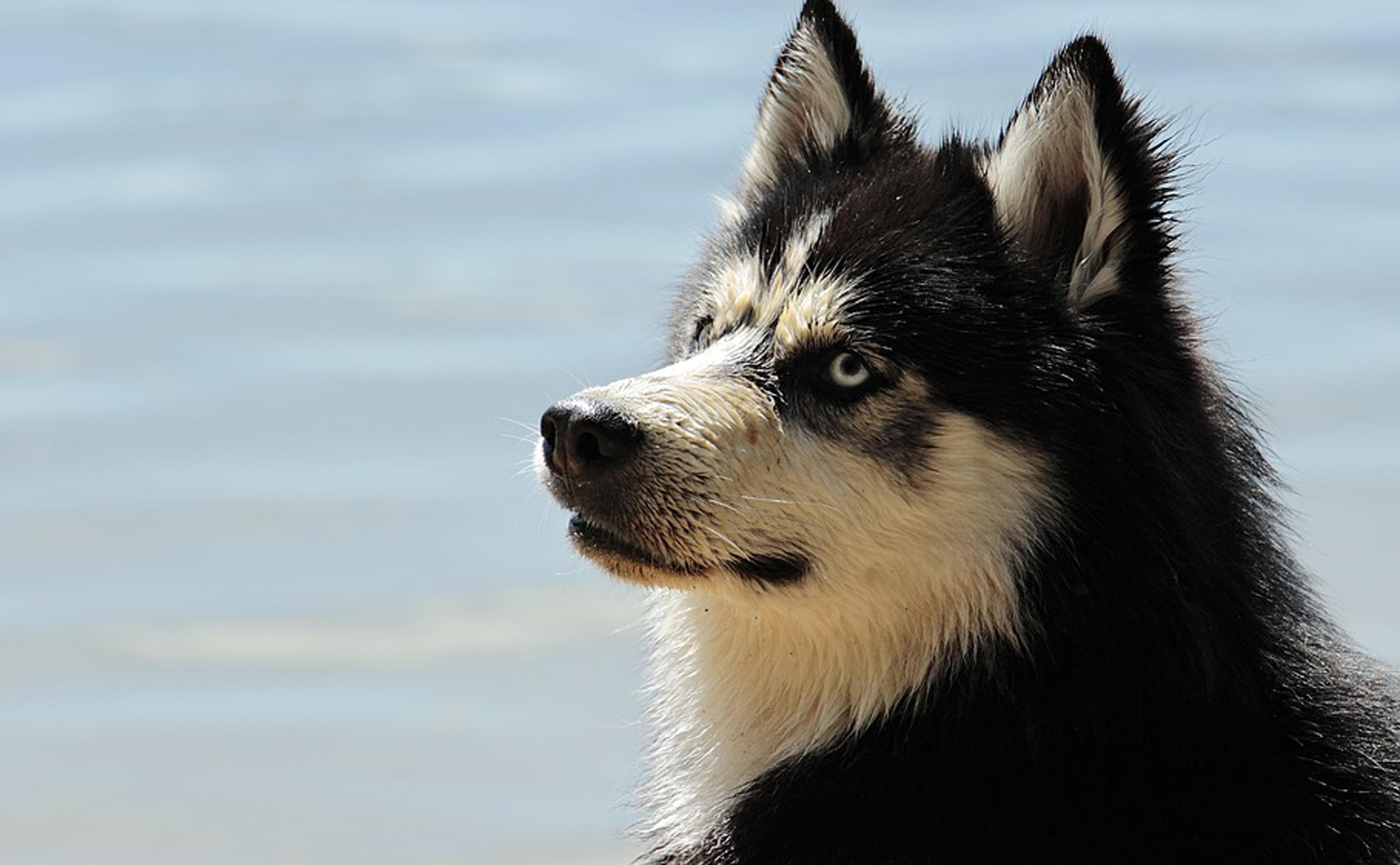 Hond06