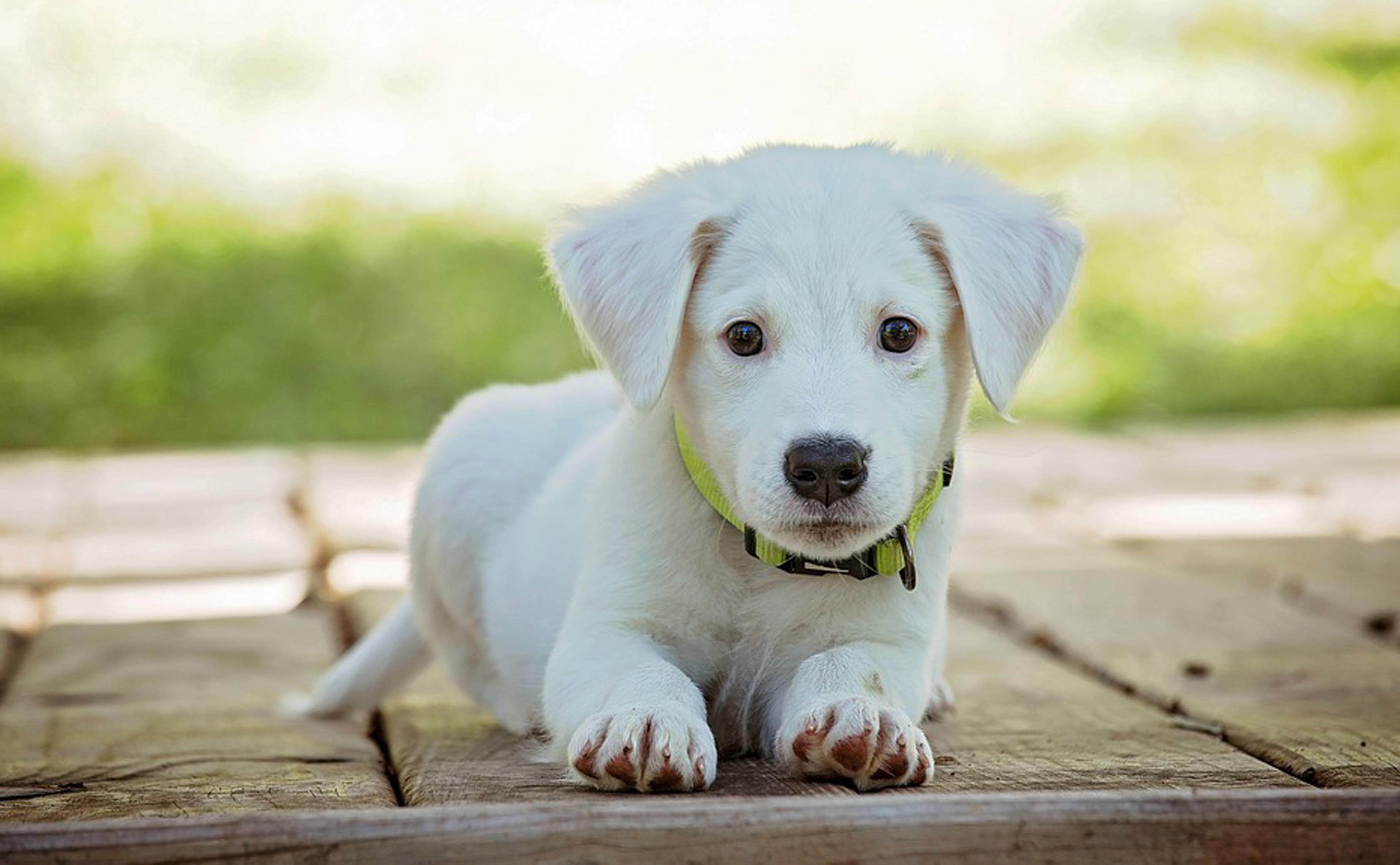 Hond08