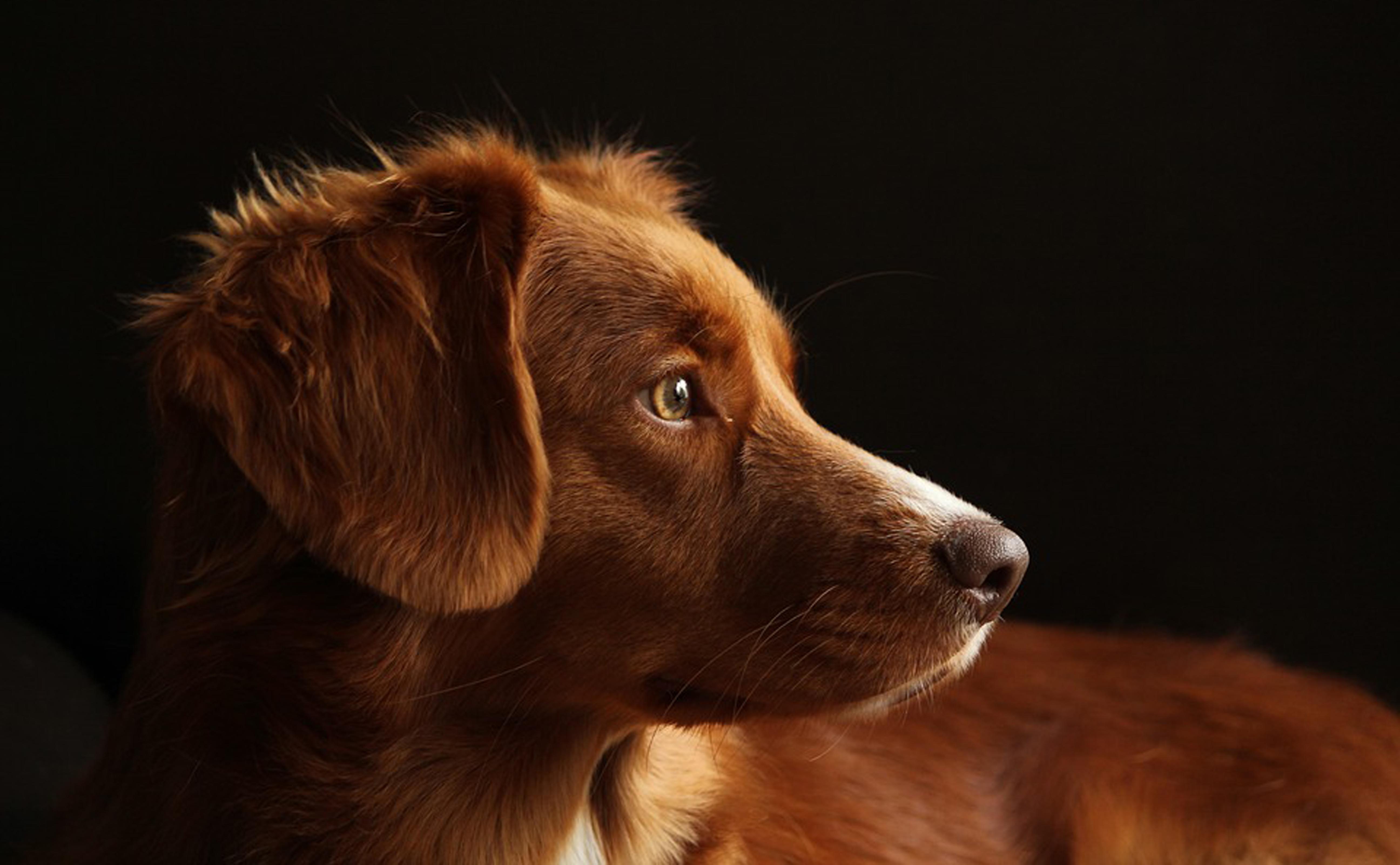 Hond11