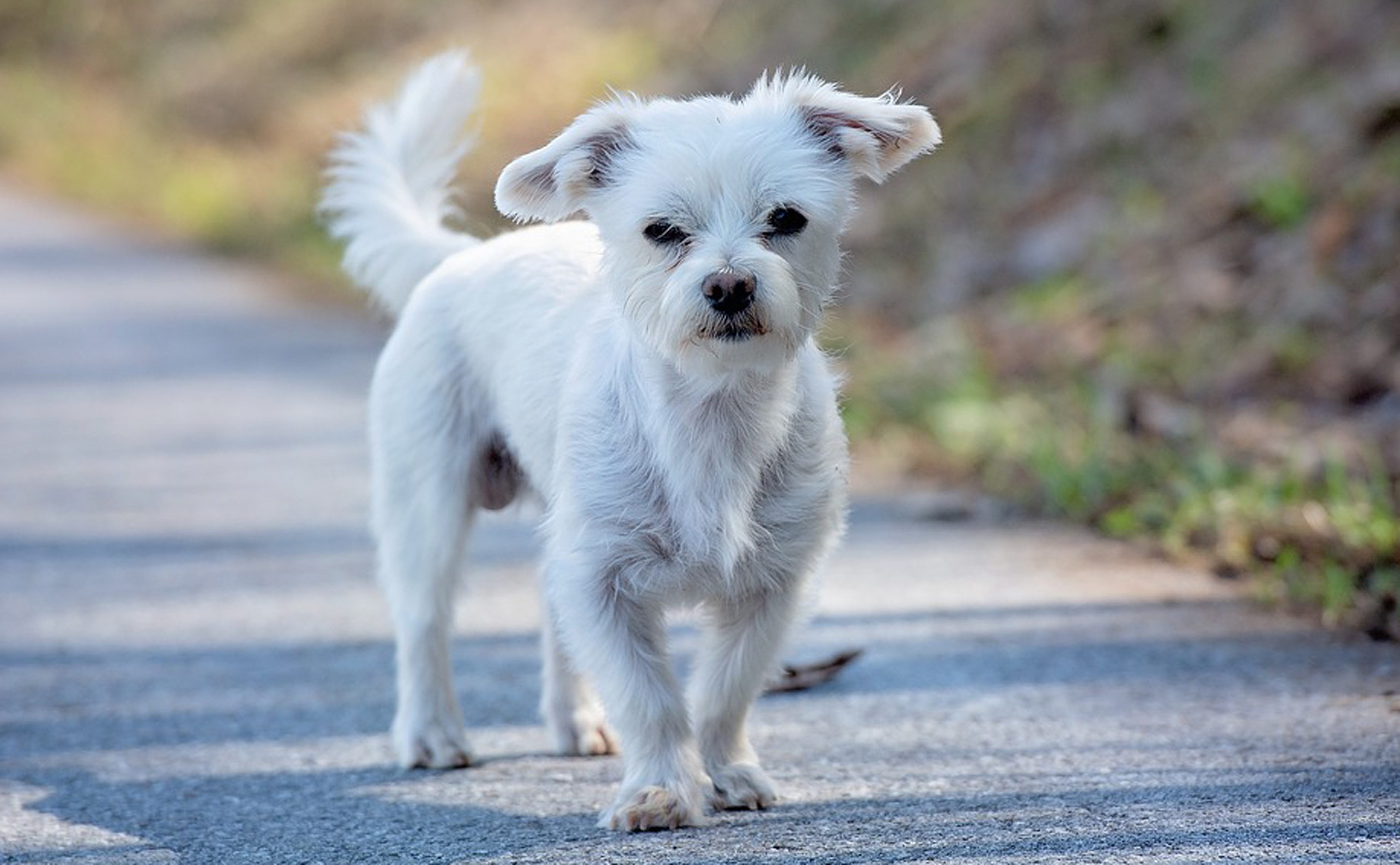 Hond18