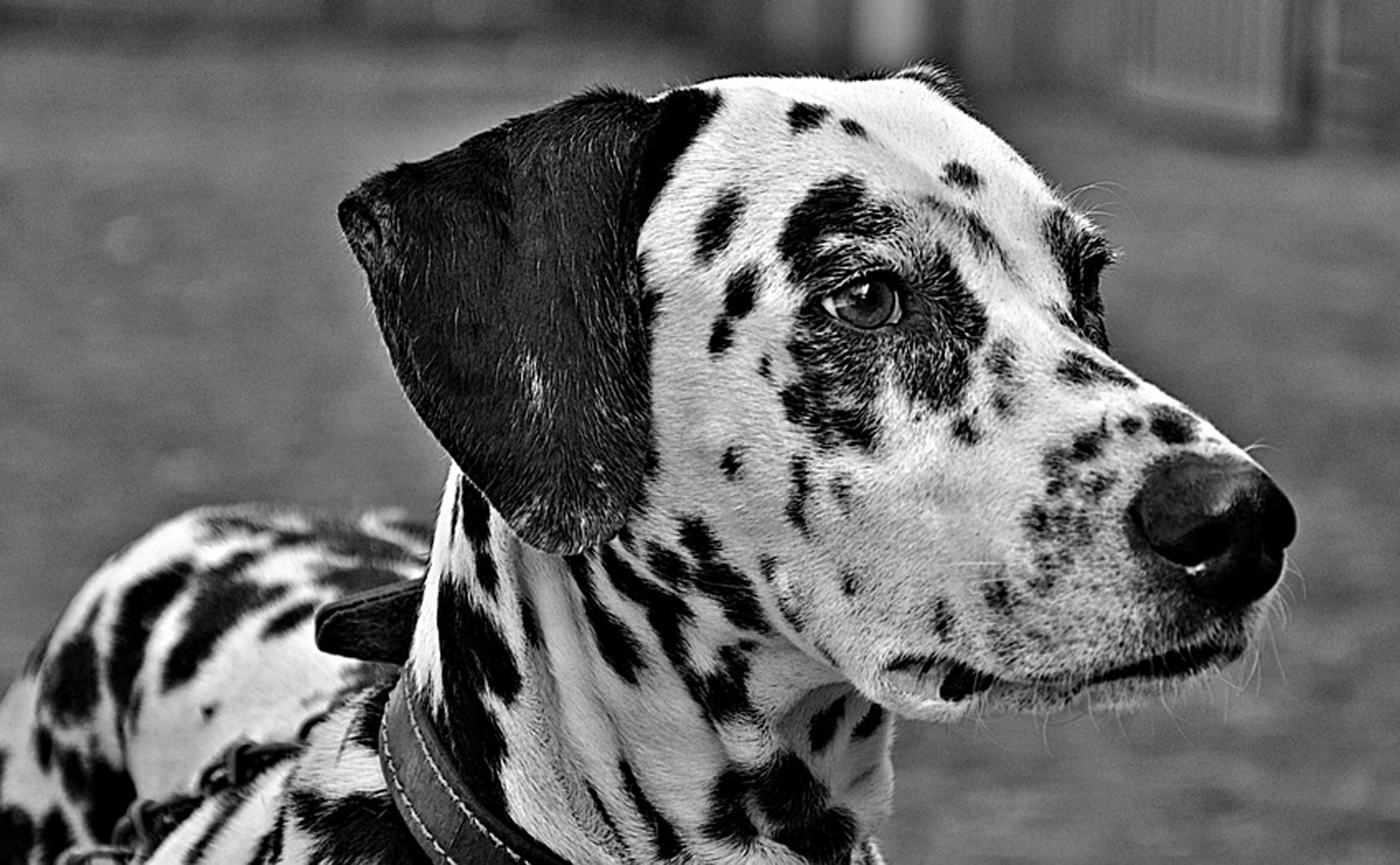 Hond23
